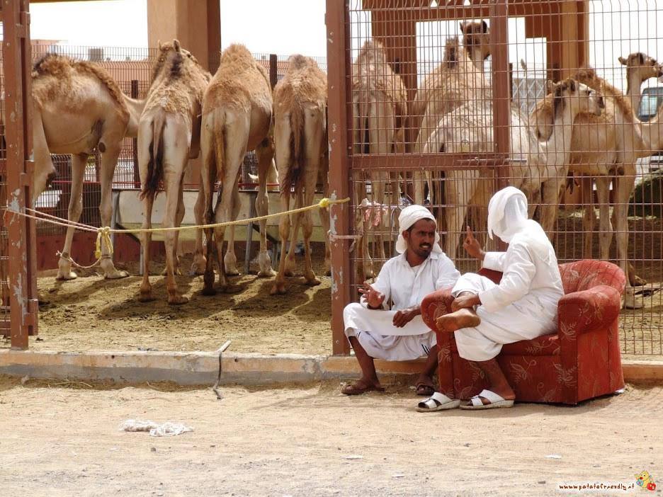 Mercato dei cammelli - Al Ain