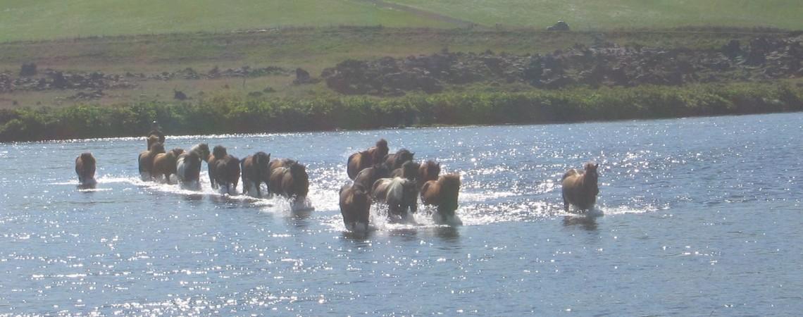 Islanda - Una vacanza in Islanda a cavallo