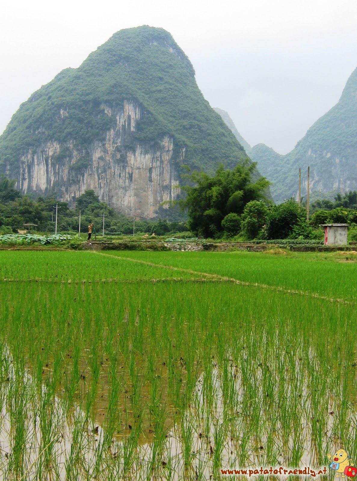 Risaia dopo la pioggia - Yangshuo - Cina