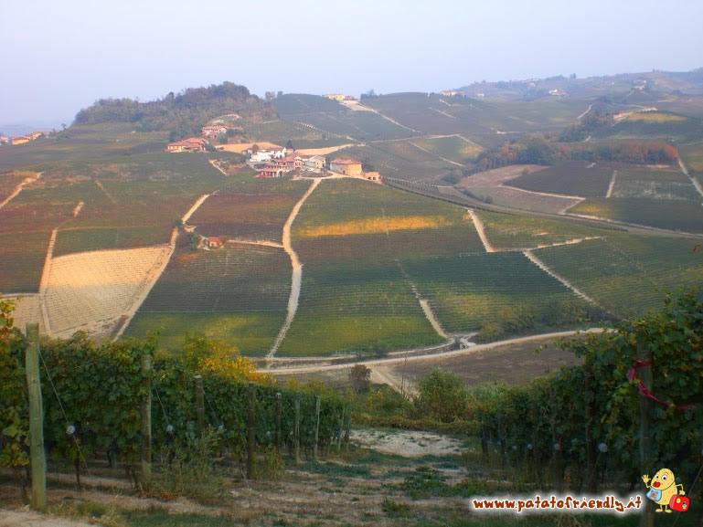 Veduta delle colline di Barolo