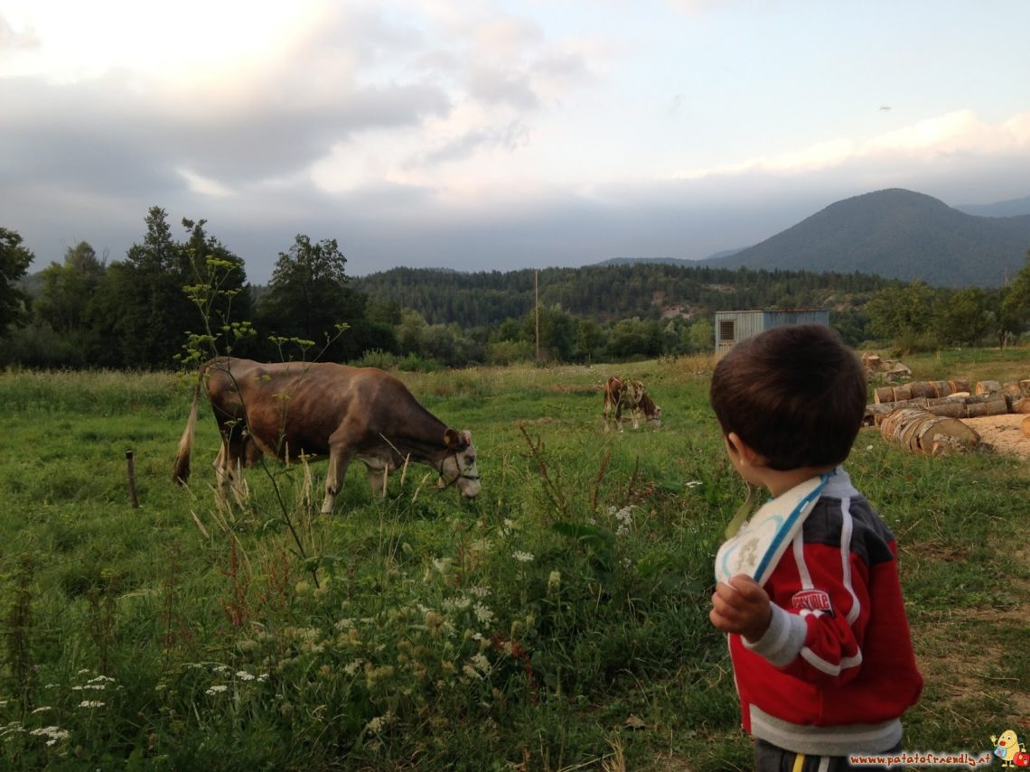 Correndo incontro alle mucche in Croazia