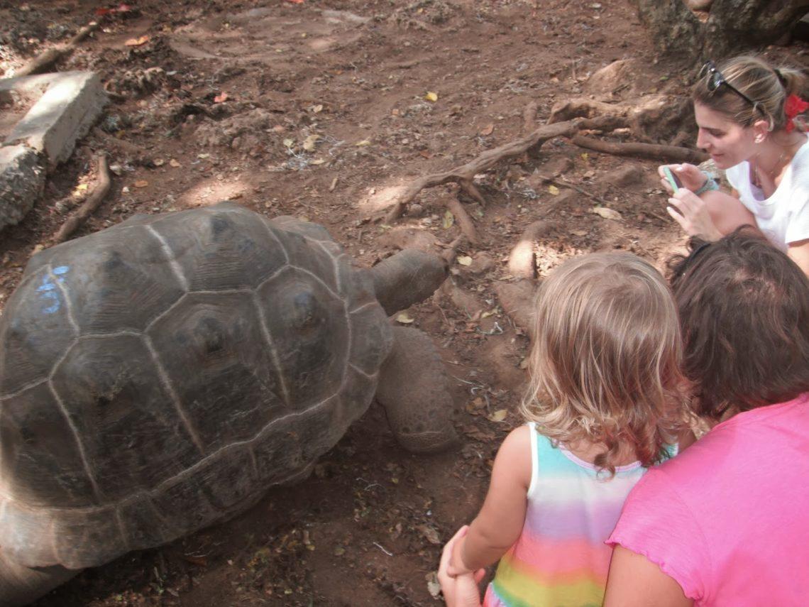 Tartaruga Zanzibar credits: Eleonora - L'angolo di me stessa