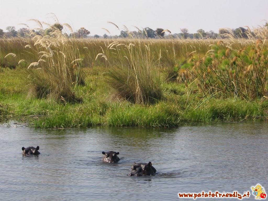 [cml_media_alt id='2737']Botswana Il delta dell'Okawango - viaggio in Africa[/cml_media_alt]