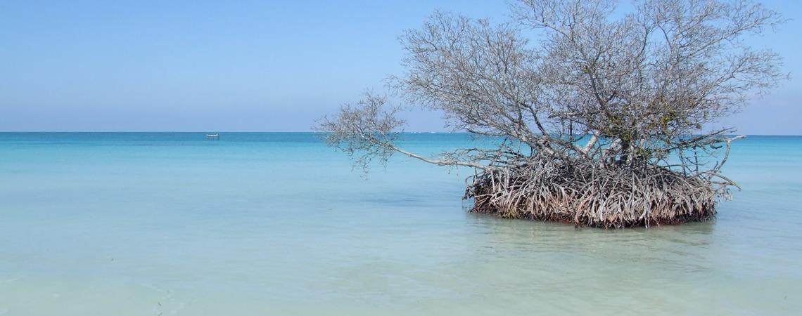 Il mare cristallino di Cuba