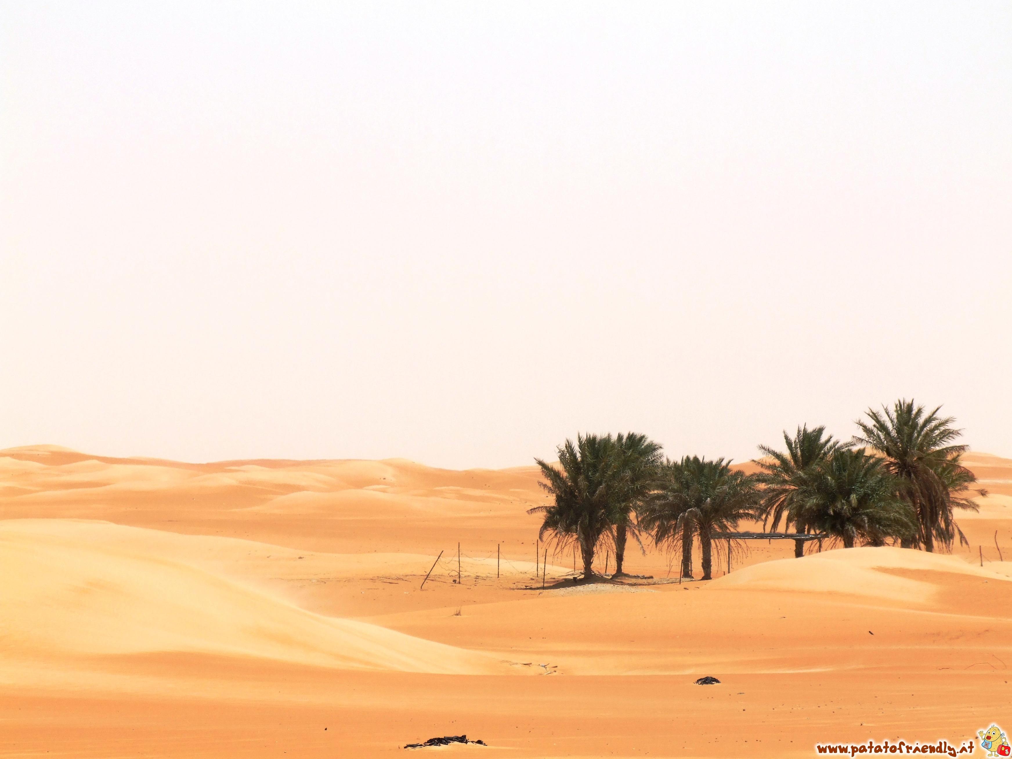 Oasi nel deserto degli Emirati Arabi