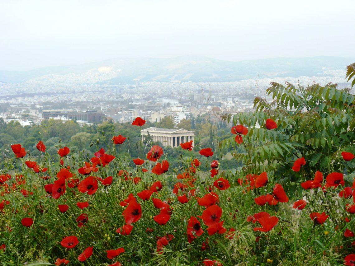 Ammirando il panorama immersi nel profumo dei fiori - credits Tommaso