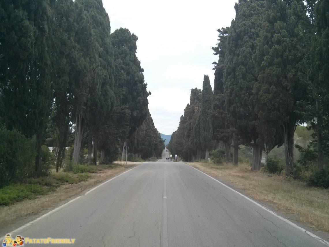Il viale dei cipressi reso immortale da Carducci