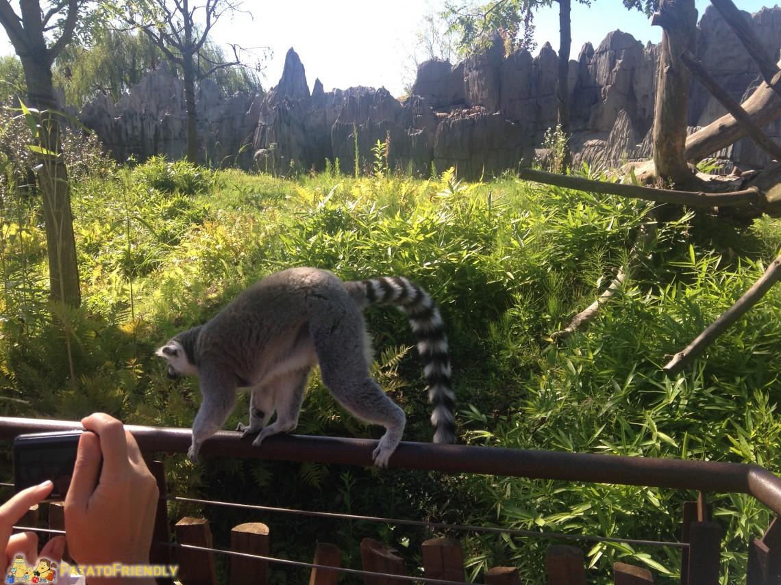 Lemuri a portata di click