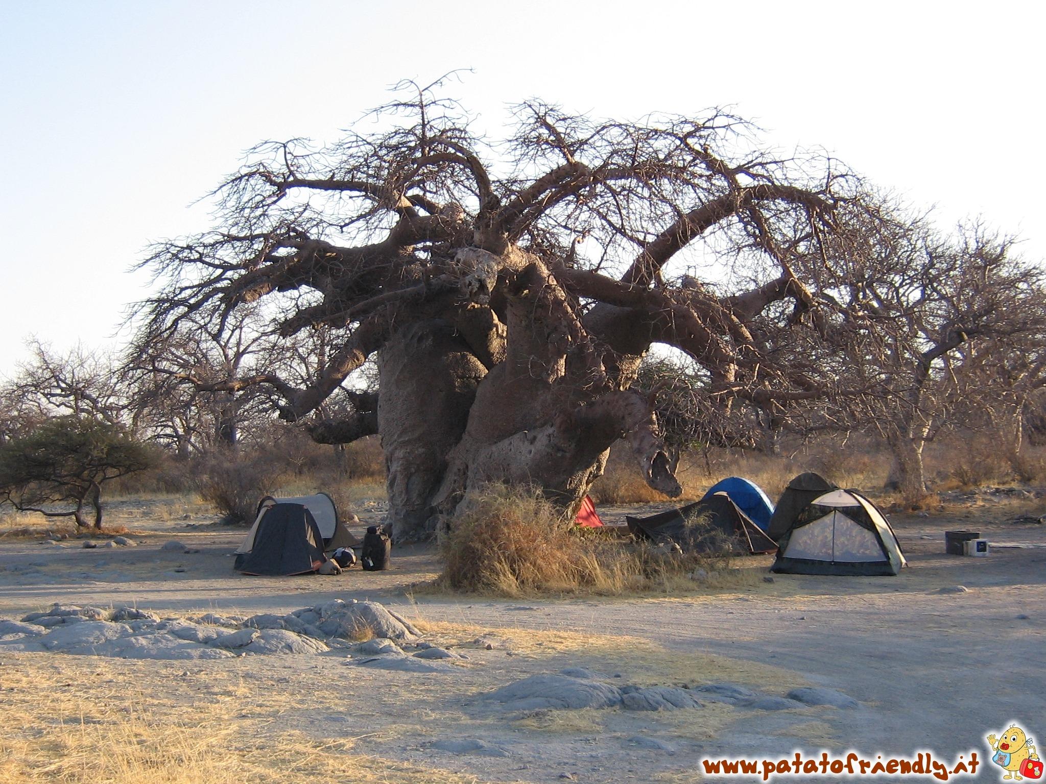 Il campo tendato di Kubu Island in Botswana