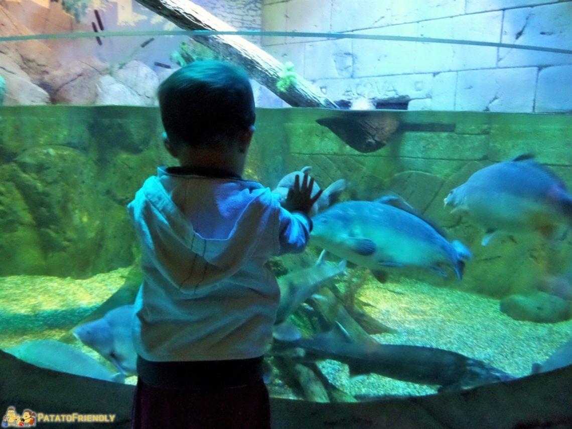 [cml_media_alt id='4403']Il Patato incantato dai pesci di un acquario[/cml_media_alt]