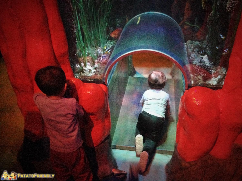 I percorsi adatti ai bambini di Sea Life