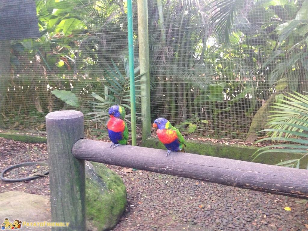 [cml_media_alt id='5063']I pappagalli del Jardin Botanique a Deshaies - Guadeloupe[/cml_media_alt]