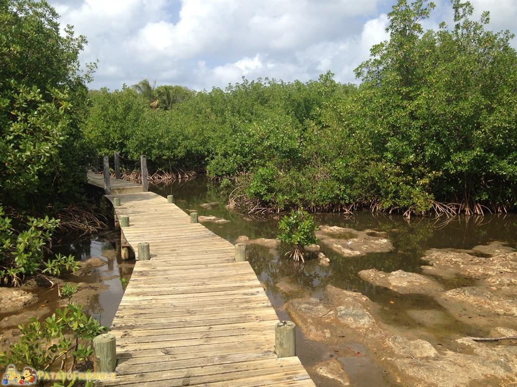 [cml_media_alt id='5070']L'isola di Guadalupa e la palude di mangrovie che separa Basse Terre da Grande Terre[/cml_media_alt]