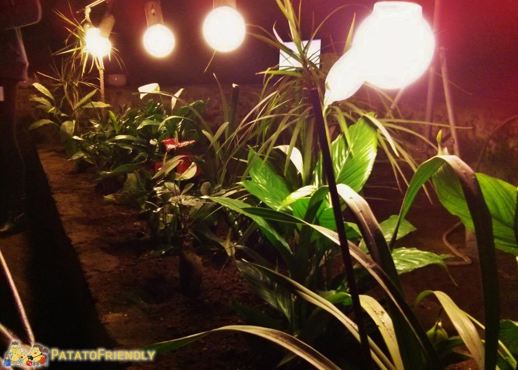 [cml_media_alt id='5223']Napoli sotterranea - Prove di coltivazione sottoterra[/cml_media_alt]