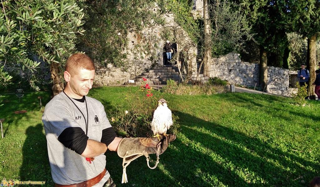 Uno dei rapaci del Castello di Vezio con l'addestratore - cose da vedere a Varenna