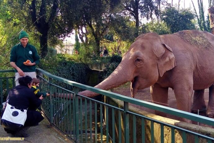 Il Bioparco di Roma - L'Elefante Asiatico intento a procacciarsi una carota dalle mani di un bambino