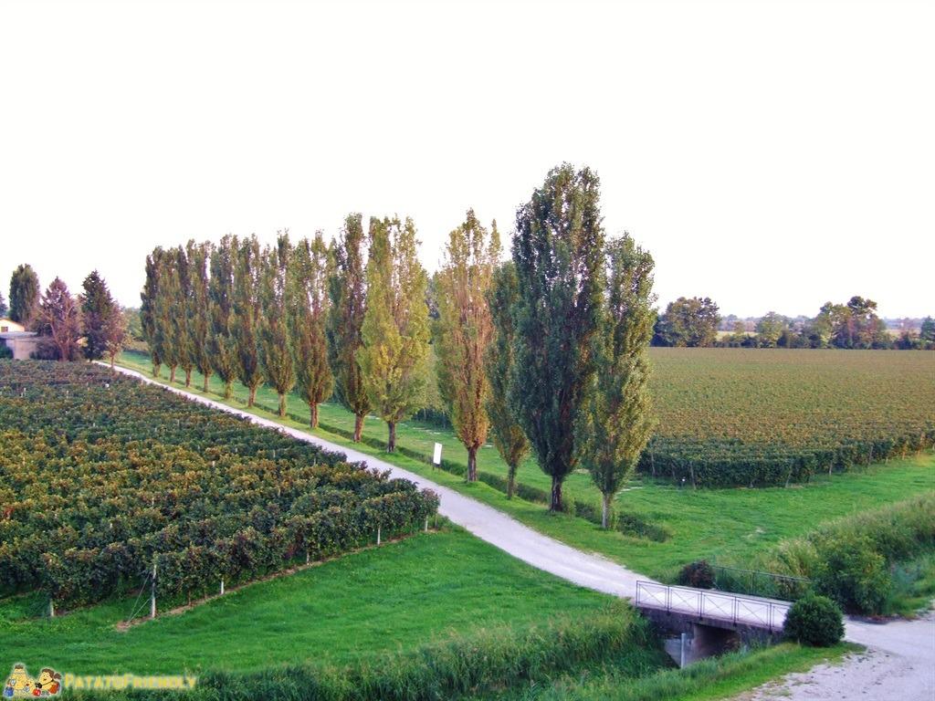 [cml_media_alt id='5244']La strada dei Vini - Le vigne venete[/cml_media_alt]