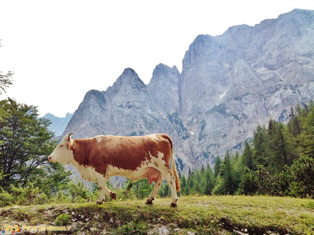 [cml_media_alt id='5337']Lago di Bled - Il vicino massiccio del Triglav[/cml_media_alt]