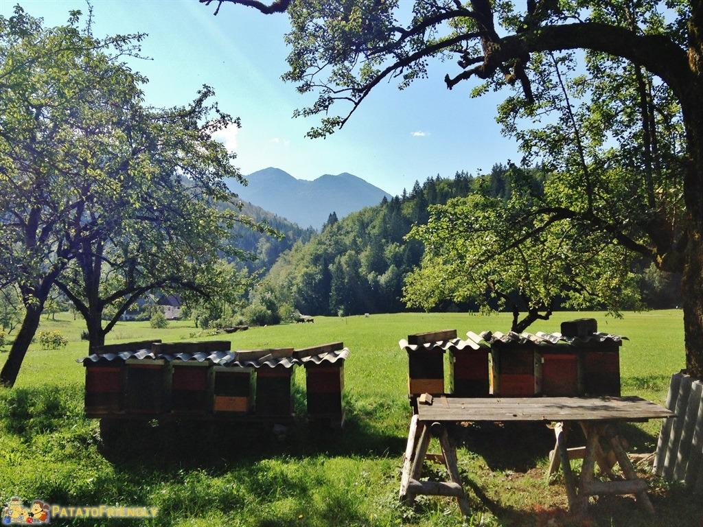 [cml_media_alt id='5339']Lago di Bled - La campagna e il Triglav[/cml_media_alt]