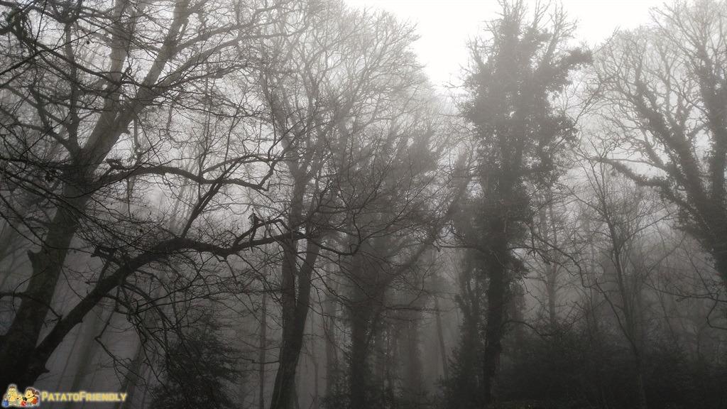 [cml_media_alt id='5623']Vico del Gargano - La misteriosa Foresta Umbra[/cml_media_alt]