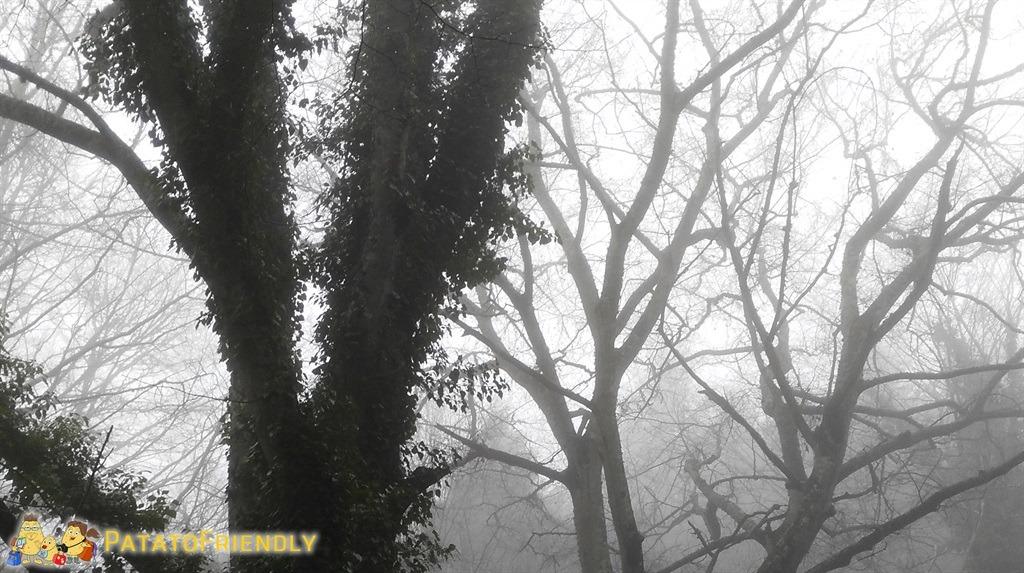[cml_media_alt id='5626']il bosco che sembra incantato[/cml_media_alt]