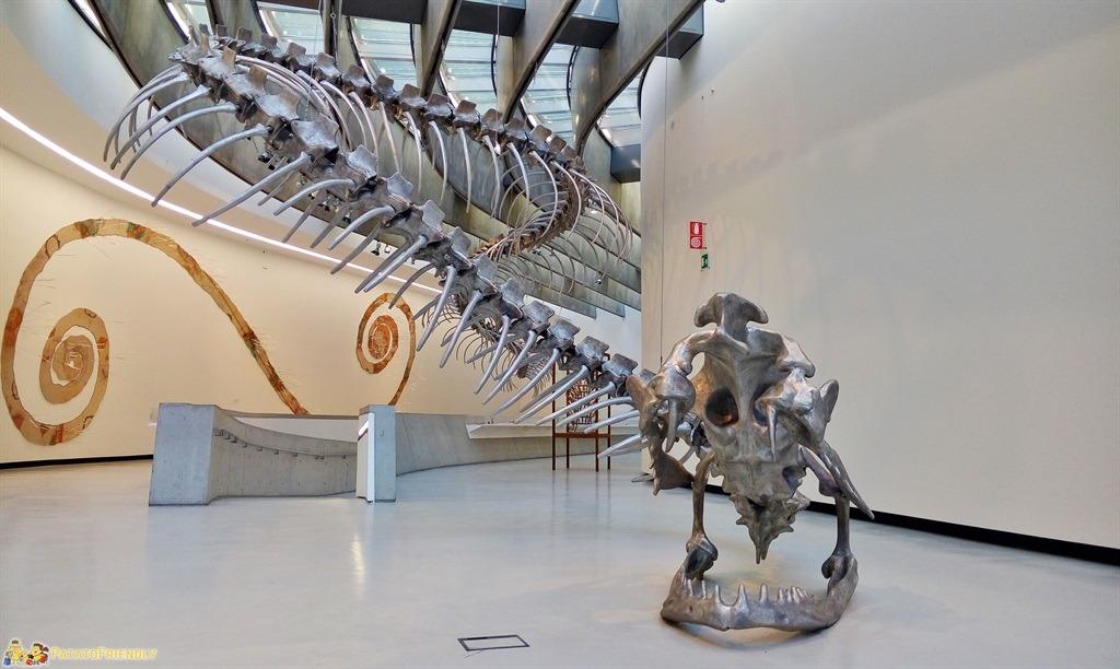 Il MAXXI di Roma - Il grande Drago in esposizione