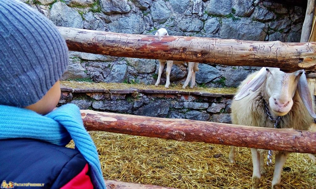 [cml_media_alt id='5401']I Mercatini di Natale in Trentino - Rango - Il Patato guarda rapito una delle pecore[/cml_media_alt]