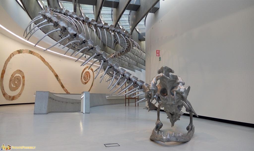Il MAXXI di Roma - Il grande scheletro di drago