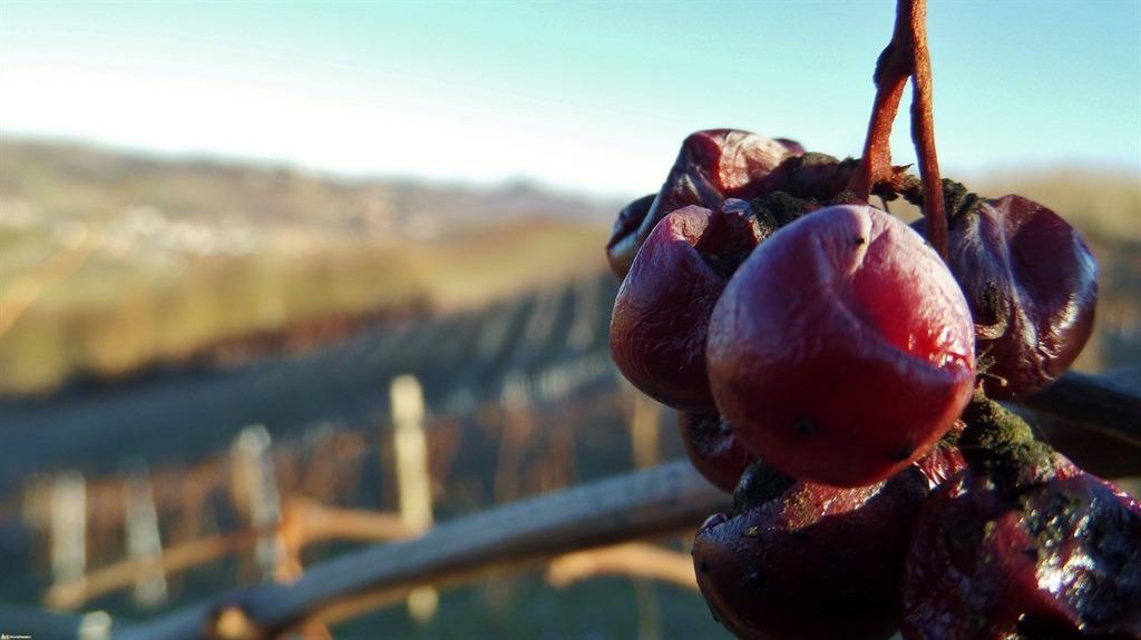 [cml_media_alt id='5368']Un grappolo d'uva dimenticato[/cml_media_alt]