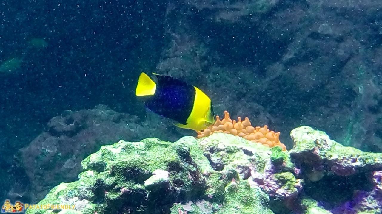 Andare a Genova con bambini Acquario di Genova - Un coloratissimo pesce tropicale