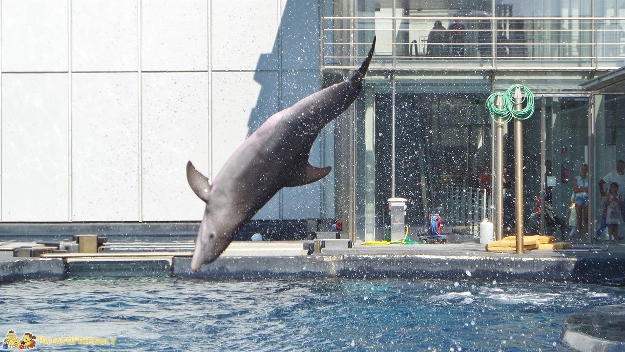[cml_media_alt id='6173']Acquario di Genova - Il balzo di un delfino[/cml_media_alt]