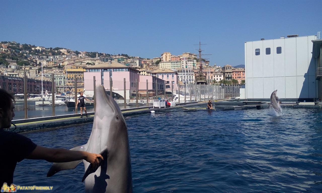 Acquario di Genova - Lo spettacolo dei delfini dell'acquario a Genova che saltano fuori dall'acqua