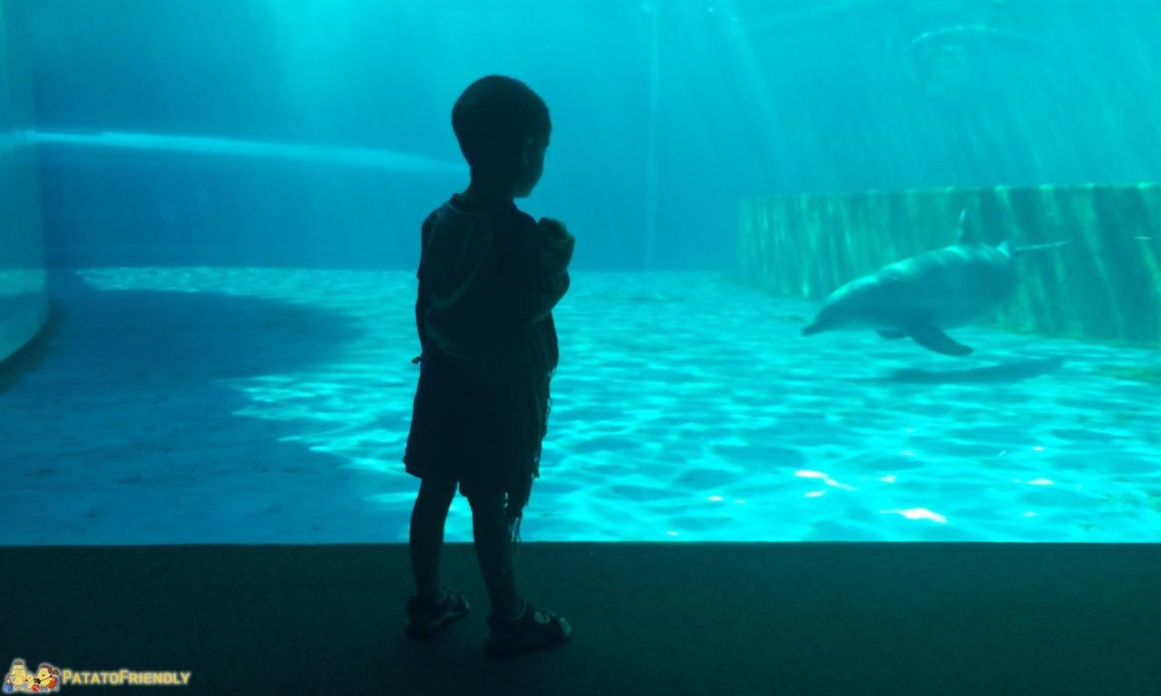 Acquario di Genova con bambini - Il Patato rapito dai delfini