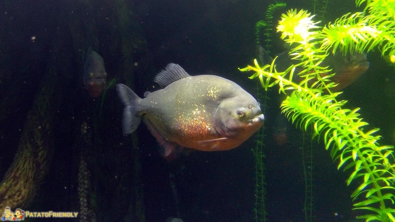 Visita all 39 acquario di genova coi bambini patatofriendly for Acquario a colonna