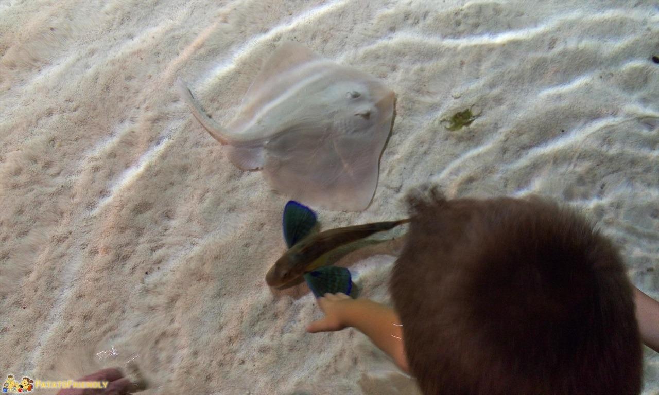 visita all'acquario di genova coi bambini - patatofriendly - Acquario Di Genova Orari Biglietteria