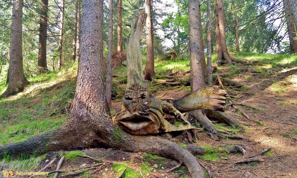 [cml_media_alt id='5882']Alta Val Pusteria - Le magiche sculture nei boschi[/cml_media_alt]