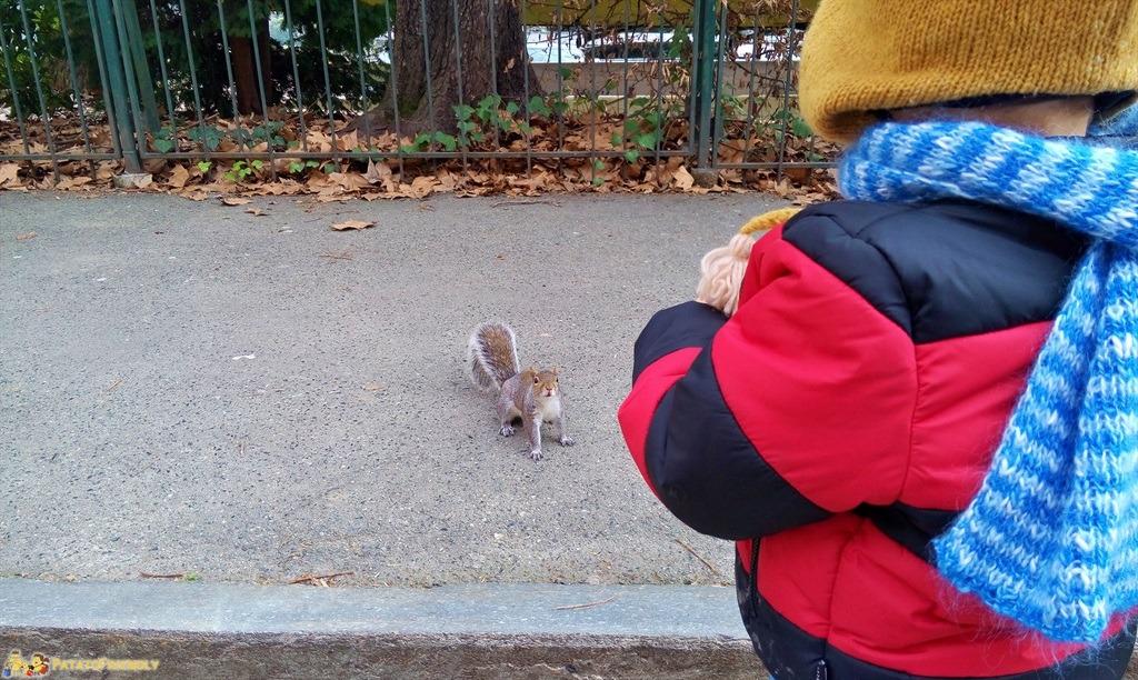 [cml_media_alt id='5519']Cosa vedere a Torino con i bambini - Un amichevole scoiattolo nel Parco del Valentino[/cml_media_alt]