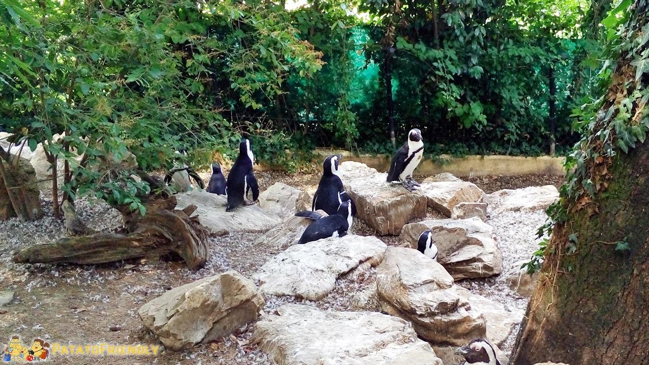 [cml_media_alt id='6016']Lo zoo di pistoia - La colonia dei pinguini[/cml_media_alt]