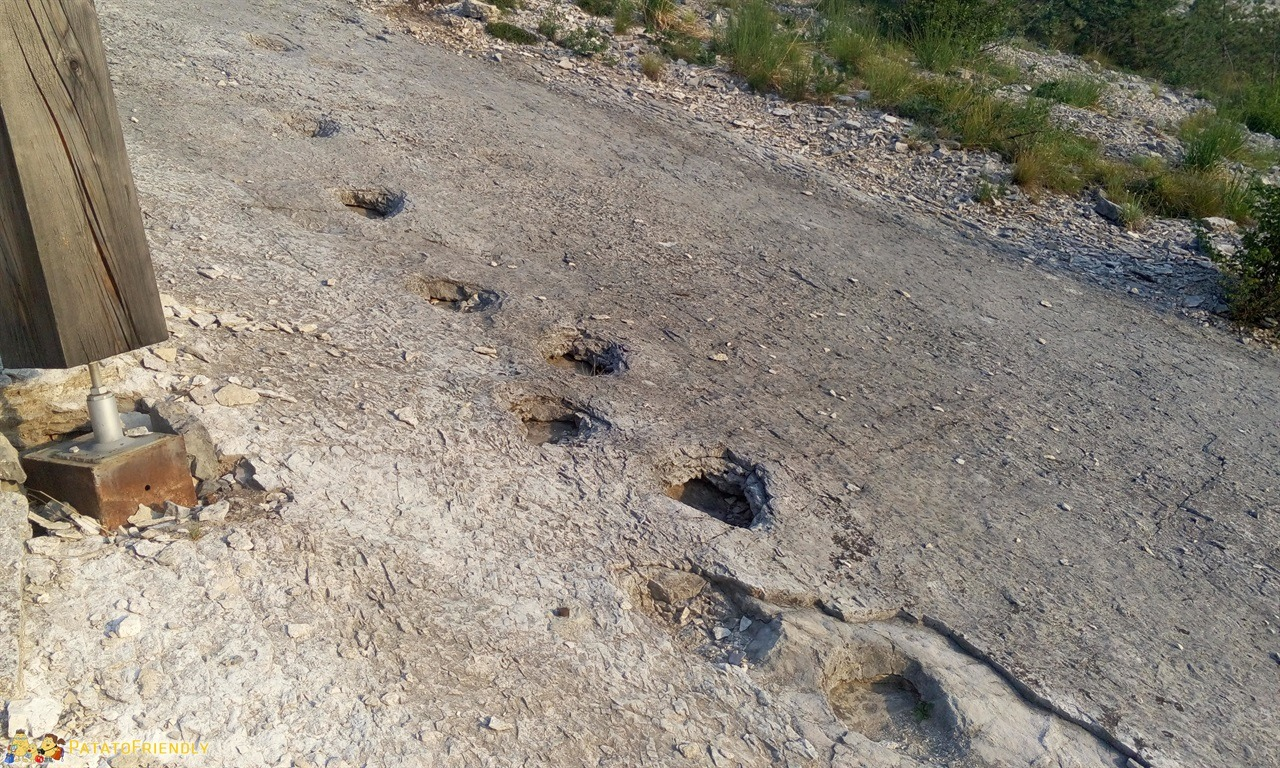 [cml_media_alt id='6264']A caccia di orme dei dinosauri - Le antiche tracce lasciate dai dinosauri[/cml_media_alt]