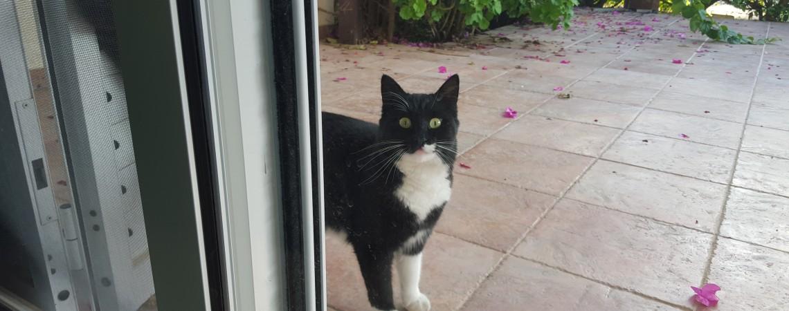Il gatto del nostro scambio casa a Cipro