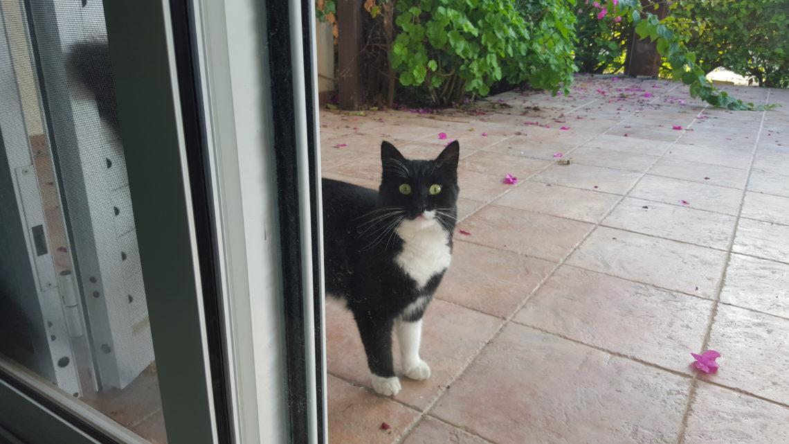 [cml_media_alt id='6955']Il gatto del nostro scambio casa a Cipro[/cml_media_alt]