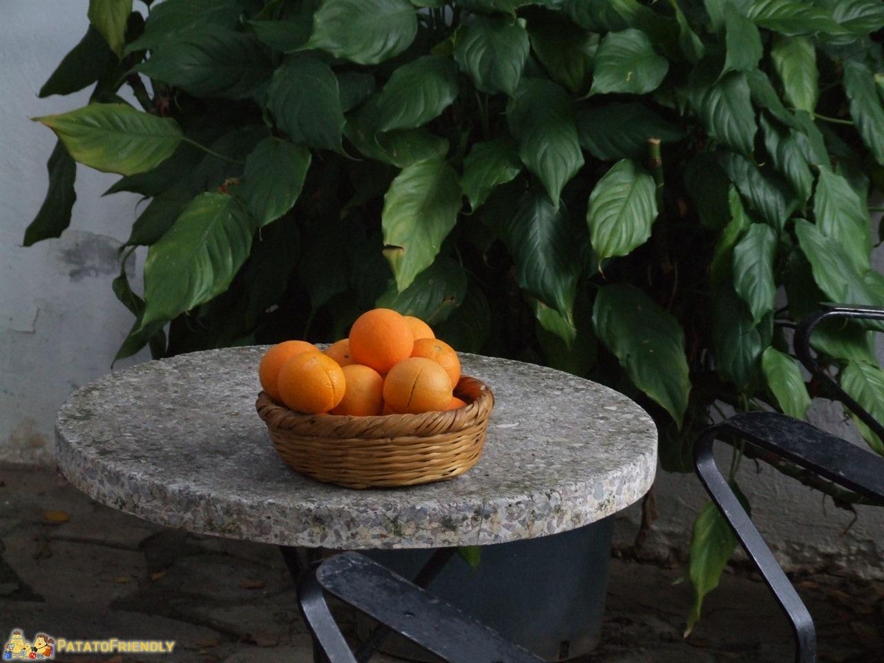 [cml_media_alt id='7066']hotel a Cipro Nord - BellaPais - Particolare del Gardens of Irini[/cml_media_alt]