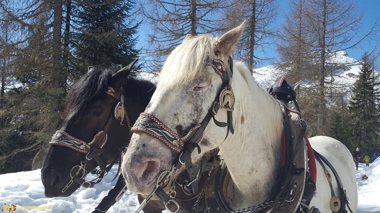 [cml_media_alt id='7288']Escursione sulla slitta trainata dai cavalli in Val di Fassa - Fritz e Cristina[/cml_media_alt]