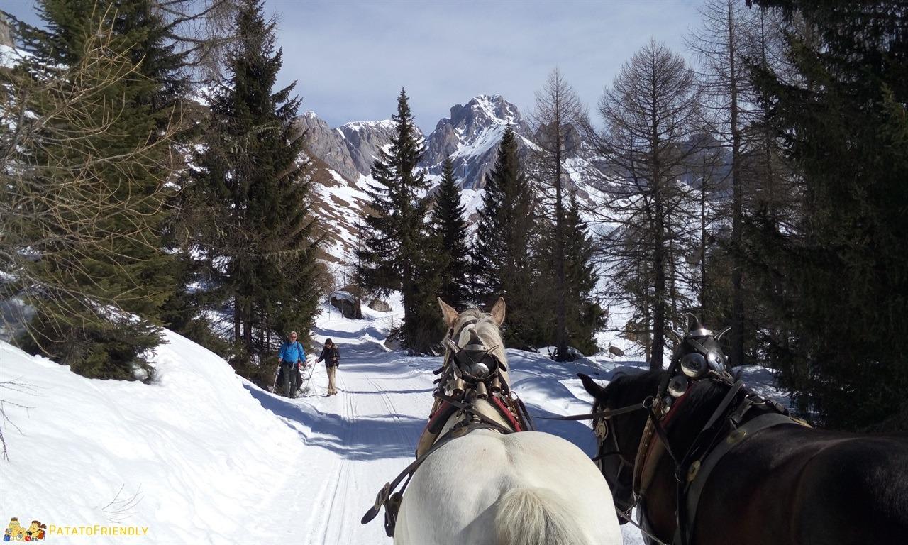 [cml_media_alt id='7296']Escursione sulla slitta trainata dai cavalli in Val di Fassa - Sulla pista in mezzo alla foresta[/cml_media_alt]