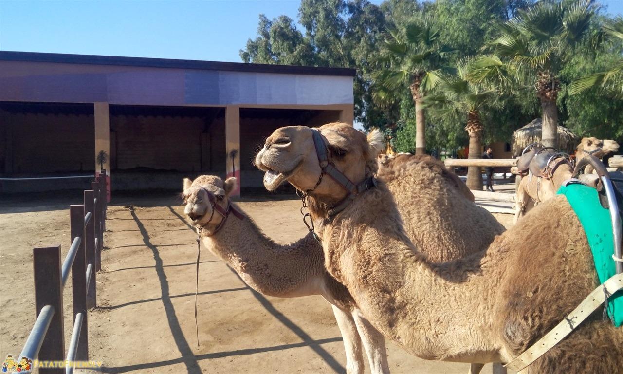 [cml_media_alt id='7070']Vacanza a Cipro - Il Camel Park vicino a Larnaka[/cml_media_alt]