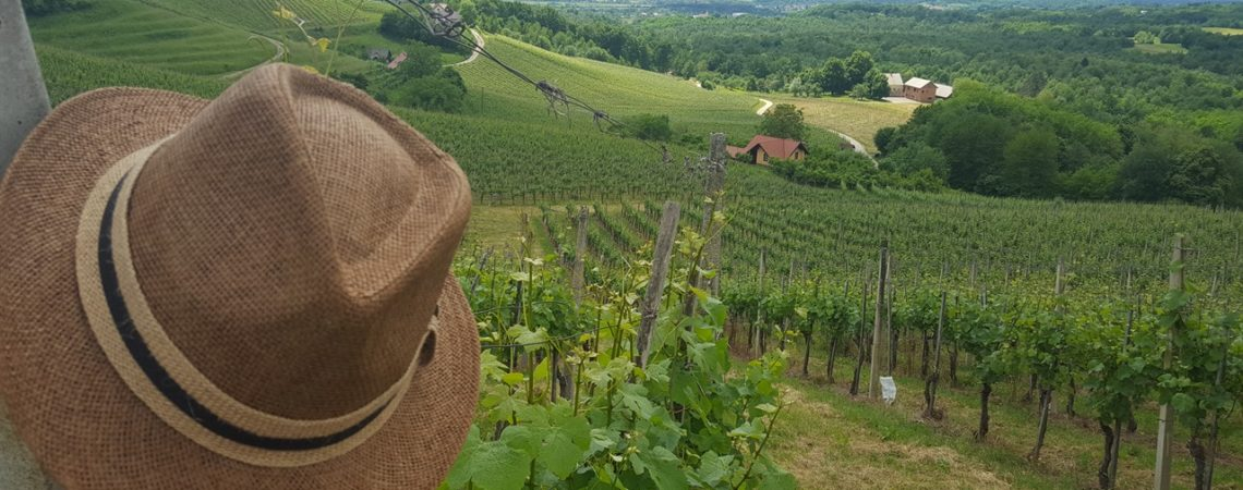 Cosa fare in Bela Krajina - Panorama tra i vigneti delle Langhe slovene