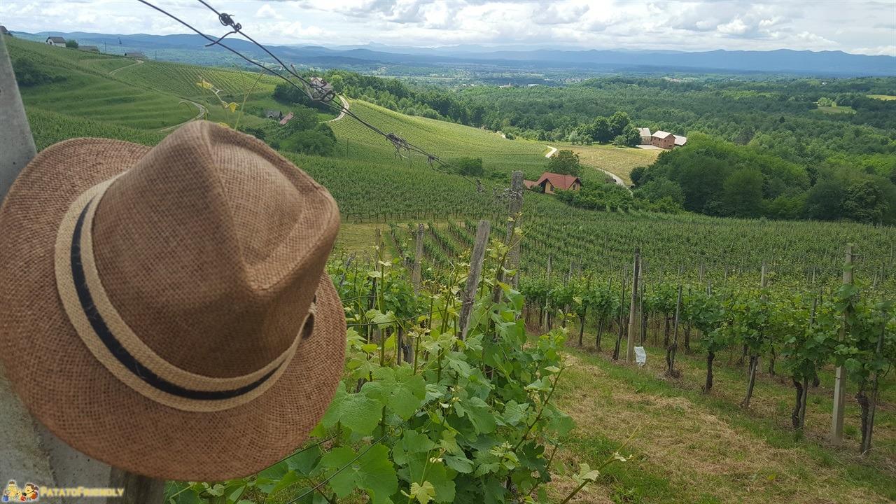 [cml_media_alt id='7731']Cosa fare in Bela Krajina - Panorama tra i vigneti delle Langhe slovene[/cml_media_alt]
