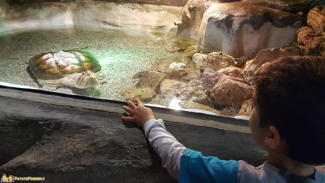[cml_media_alt id='7863']Vacanza a Jesolo con i bambini - il Tropicarium Parc[/cml_media_alt]