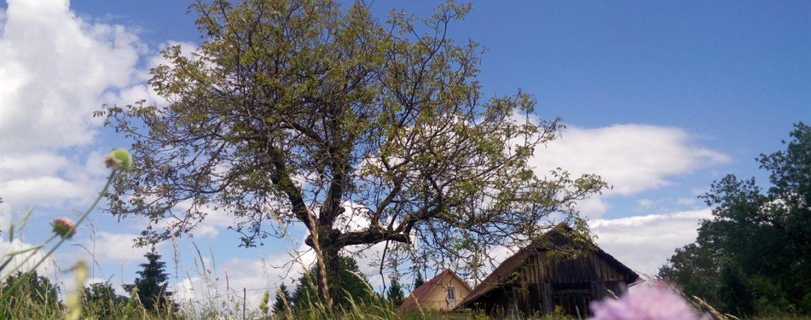Vacanza in Slovenia coi bambini - La natura slovena