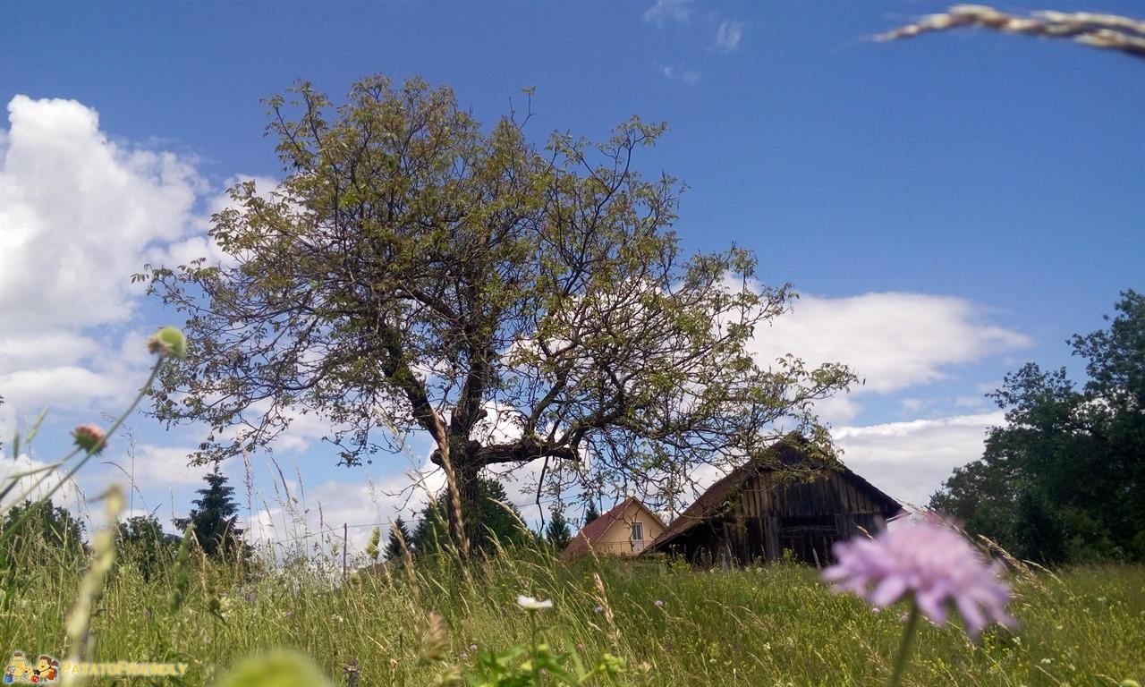 [cml_media_alt id='7692']Vacanza in Slovenia coi bambini - La natura slovena[/cml_media_alt]